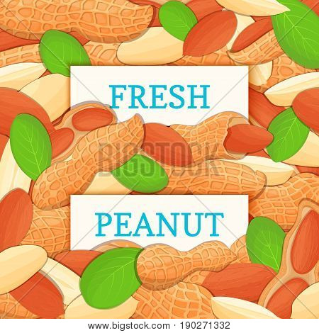 Two white rectangle label on peanut fruit background. Vector card illustration. Nutty pattern groundnut nut whole and slice leaves for design of food packaging breakfast detox diet, vegan