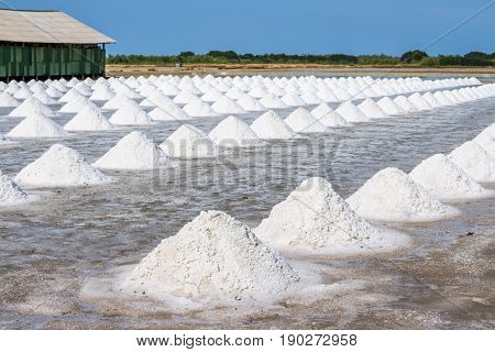 Heap of sea salt in original salt produce farm make from natural ocean salty water preparing for last process before sent it to industry consumer.It is made in Thailand