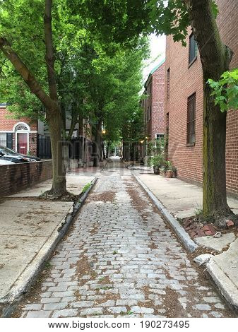 A tree-lined alleyway with brick buildings on either side
