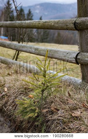 rural ethnic wooden fence with great overlooking to mountains and small pine tree