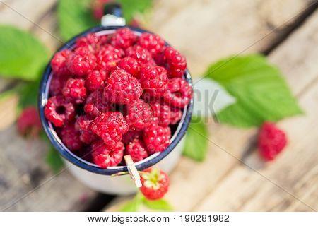 Heap of fresh sweet raspberries vitamin in white cup seasonal fruit in garden