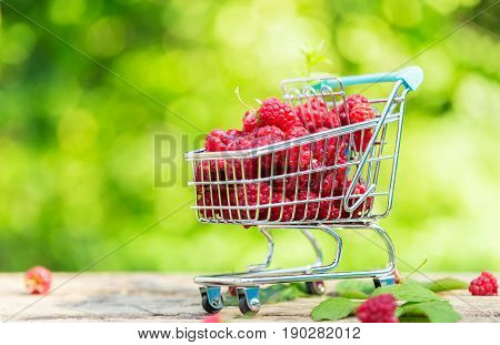 Heap of fresh sweet raspberries vitamin seasonal fruit at garden in market basket