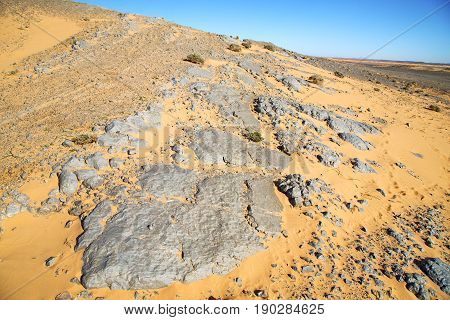Old Fossil In  The   Sahara And Rock  Stone Sky