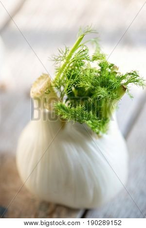 White Fennel On A Wooden Table, Daylight