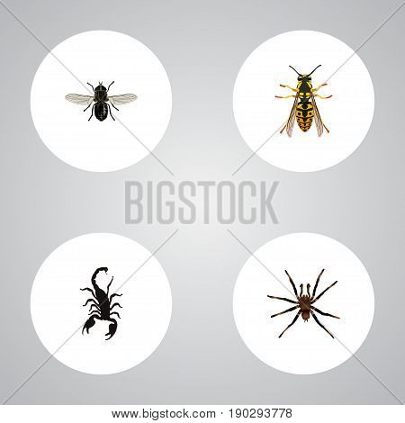 Realistic Bee, Arachnid, Midge And Other Vector Elements. Set Of Insect Realistic Symbols Also Includes Bee, Tarantula, Spider Objects.