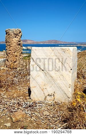 Plant  In Delos Greece The Historycal Acropolis And Old Ruin Site