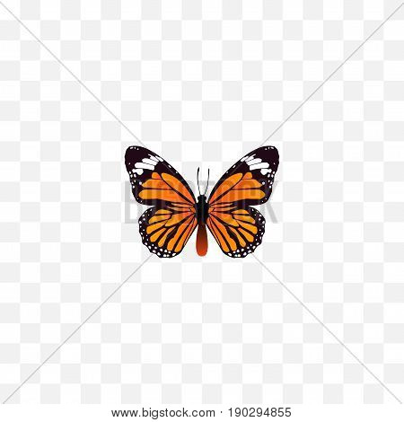 Realistic Danaus Plexippus Element. Vector Illustration Of Realistic Monarch Isolated On Clean Background. Can Be Used As Monarch, Orange And Butterfly Symbols.