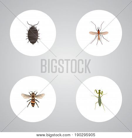 Realistic Grasshopper, Dor, Wasp And Other Vector Elements. Set Of Insect Realistic Symbols Also Includes Locust, Mantis, Grasshopper Objects.
