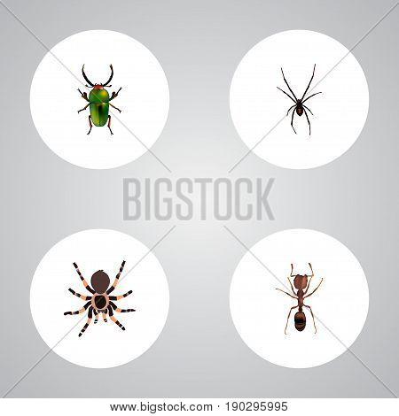 Realistic Emmet, Tarantula, Spinner And Other Vector Elements. Set Of  Realistic Symbols Also Includes Pismire, Beetle, Spider Objects.