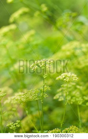 Beautiful Green summer or spring natural blurred background