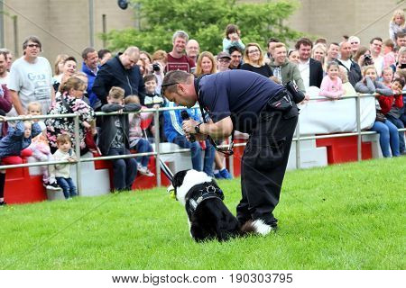 Beaulieu, Hampshire, Uk - May 29 2017: Fire Dog Handler Of The Hampshire Arson Task Force Working Wi