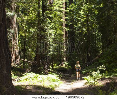 Woman running on trail in northern California redwood preserve.