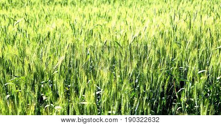 In Iran Cultivated Farm