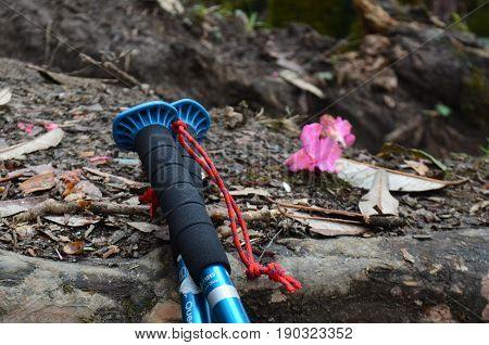 Travel Equipment, Trekking Stick and flower on the ground. Nepal, Annapurna region, Mardi Himal track.