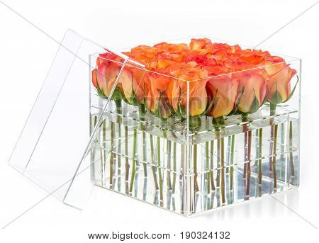 Bunch of orange roses in container over white background