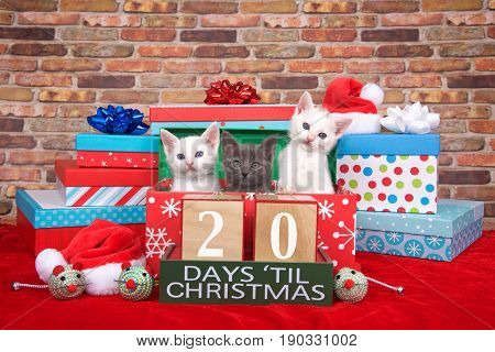 Two fluffy white and one gray kitten popping out of a pile of presents small santa hats toy mice and count down to Christmas blocks. Red fuzzy carpet brick wall background. 20 days til Christmas