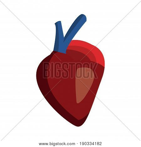heart of human body health medicine cardiology anatomy vector illustration