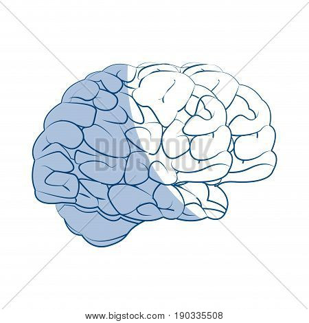 human brain medical science section schematic vector illustration