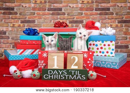 Two fluffy white and one gray kitten popping out of a pile of presents small santa hats toy mice and count down to Christmas blocks. Red fuzzy carpet brick wall background. 12 days til Christmas