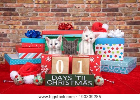 Two fluffy white and one gray kitten popping out of a pile of presents small santa hats toy mice and count down to Christmas blocks. Red fuzzy carpet brick wall background. 01 days til Christmas