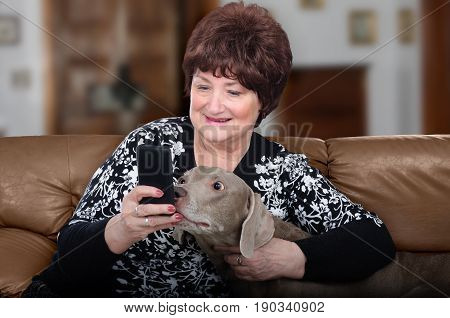 Older woman with weimaraner dog have mobile video chat. Both are happy sitting on brown leather sofa and look at the phone screen. Blurred interior background