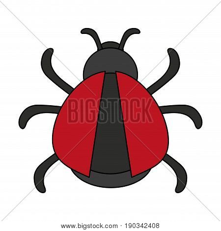 black and red bug over white background vector illustration design