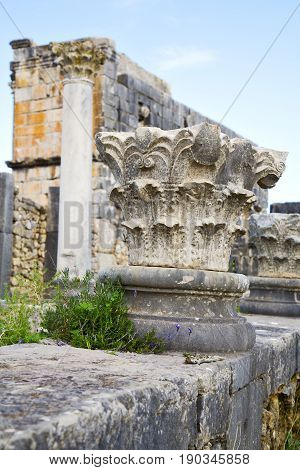 Volubilis In Morocco Africa The   Deteriorated Monument And Site