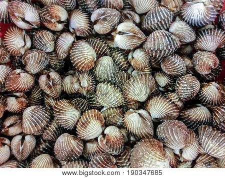 Top view of Fresh Cockle shell for background. usage.
