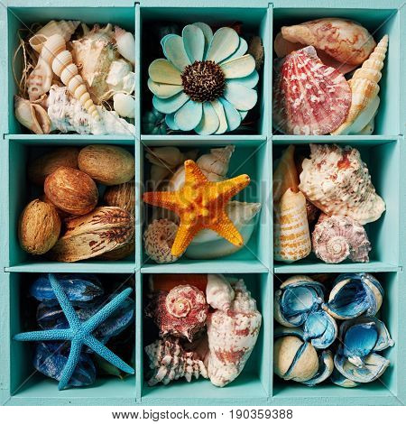 Sea shell display box filled with shells, starfish and  scented potpourri