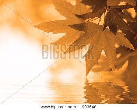 Autumn Leaves Reflecting In The Water, Shallow Focus
