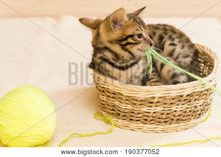 Kittens play with a yellow ball of thread sitting in the basket