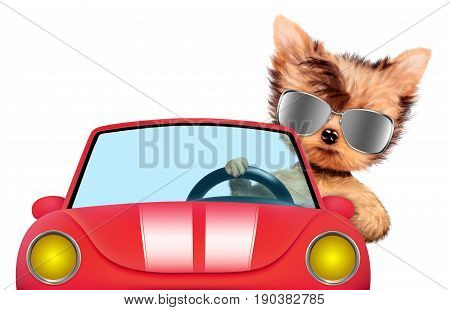 Couple of puppies sitting in the cabriolet with sunglasses, isolated on white background. Vacation and travel concept concept. Realistic 3D illustration