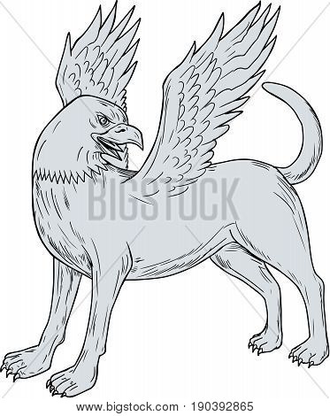 Drawing sketch style illustration of a Chamrosh a Persian mythology creature with the body of a dog with the head and wings of a bird rather like the Greek Griffin viewed from the side set on isolated white background.