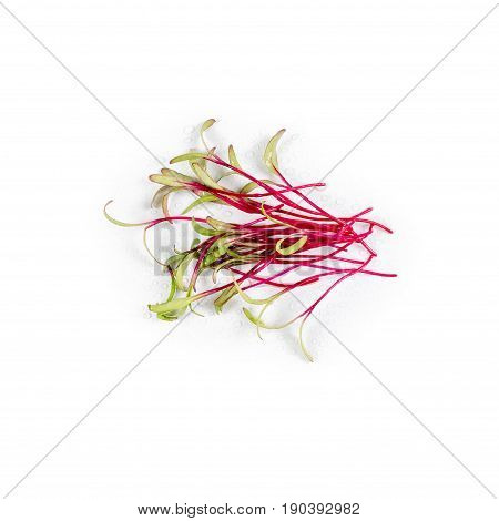 Heap of beet micro greens on white background. Healthy eating concept of fresh garden produce organically grown as a symbol of health and vitamins from nature. Microgreens closeup