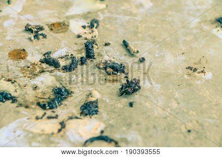 Close up bird droppings on cement wall background