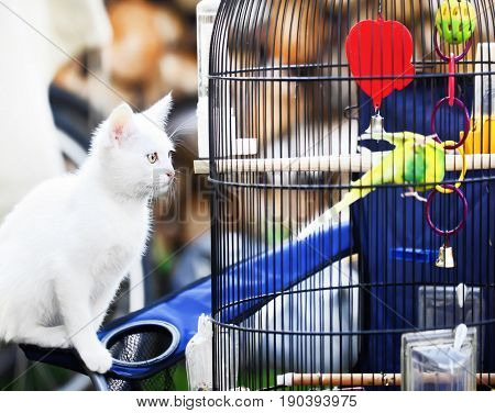 White little cat about bird in cage