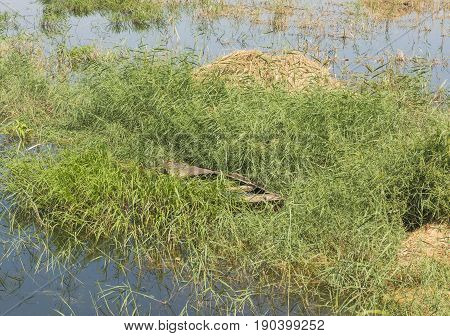 Old Wooden Rowing Boat In Grass Reeds