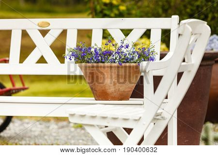 Gardening nature concept. Closeup of beautiful little purple blue flowers violets in pots standing outside on white bench