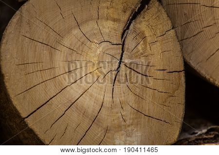 A Beautiful Close-up Of A Tree Trunk. Wooden Texture Of Age Rings.