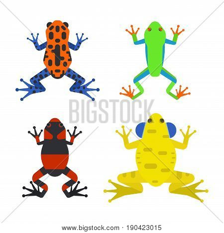 Frog cartoon tropical animal cartoon nature icon funny and isolated mascot character wild funny forest toad amphibian vector illustration. Graphic ecosystem croaking hop drawin