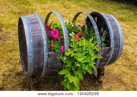 Cut Out Wine Barrel Used As Planter Box