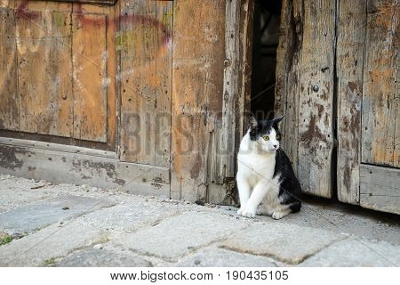 Black and white wild cat in the city cat sitting in the wooden gate