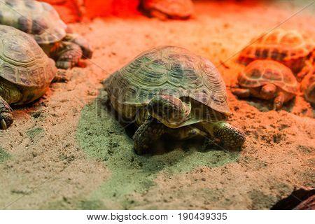 Turtle Walking On Sand