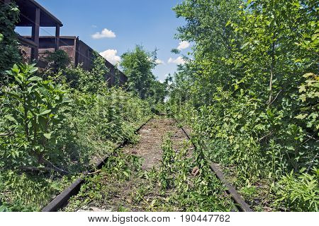 Old railway wagons on the railway track in the weeds bushes and grass.