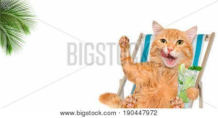 Cat relaxing sitting on deckchair in the white background.