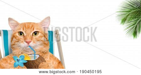 Cat sitting on deckchair and enjoying a cocktail . The white background.