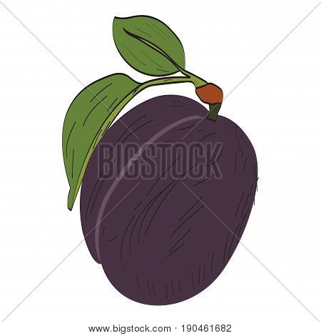 Isolated eggplant on a white background, Vector illustration