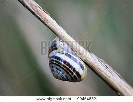 a Snail on reeds, nature, animals, snails