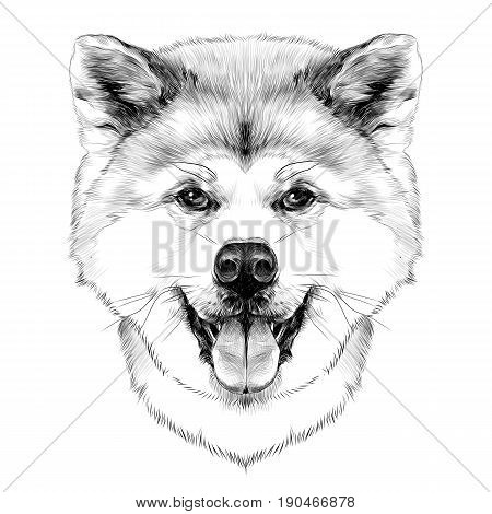 muzzle dog breed Akita inu with his tongue hanging out full face looking forward symmetrically sketch vector graphics black and white drawing