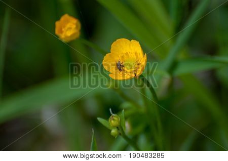 Nice Yellow Flowers On Green Leaf Background